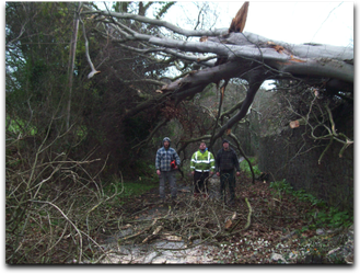 Large tree that was uprooted during a hurricane