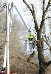 Tree removal using a bucket truck
