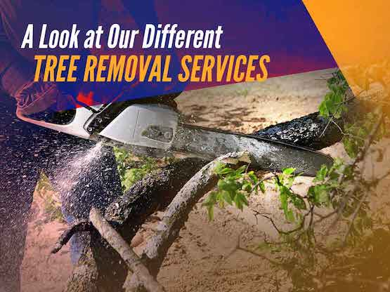 Tree Services in Virginia Beach, VA